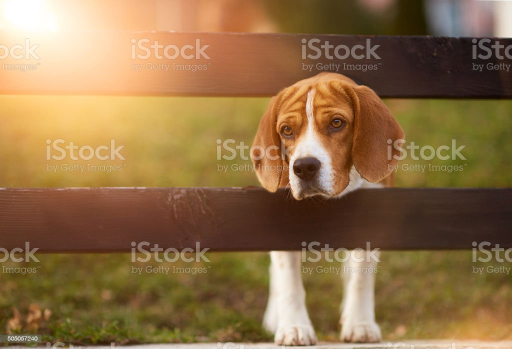 i am waiting for you stock photo