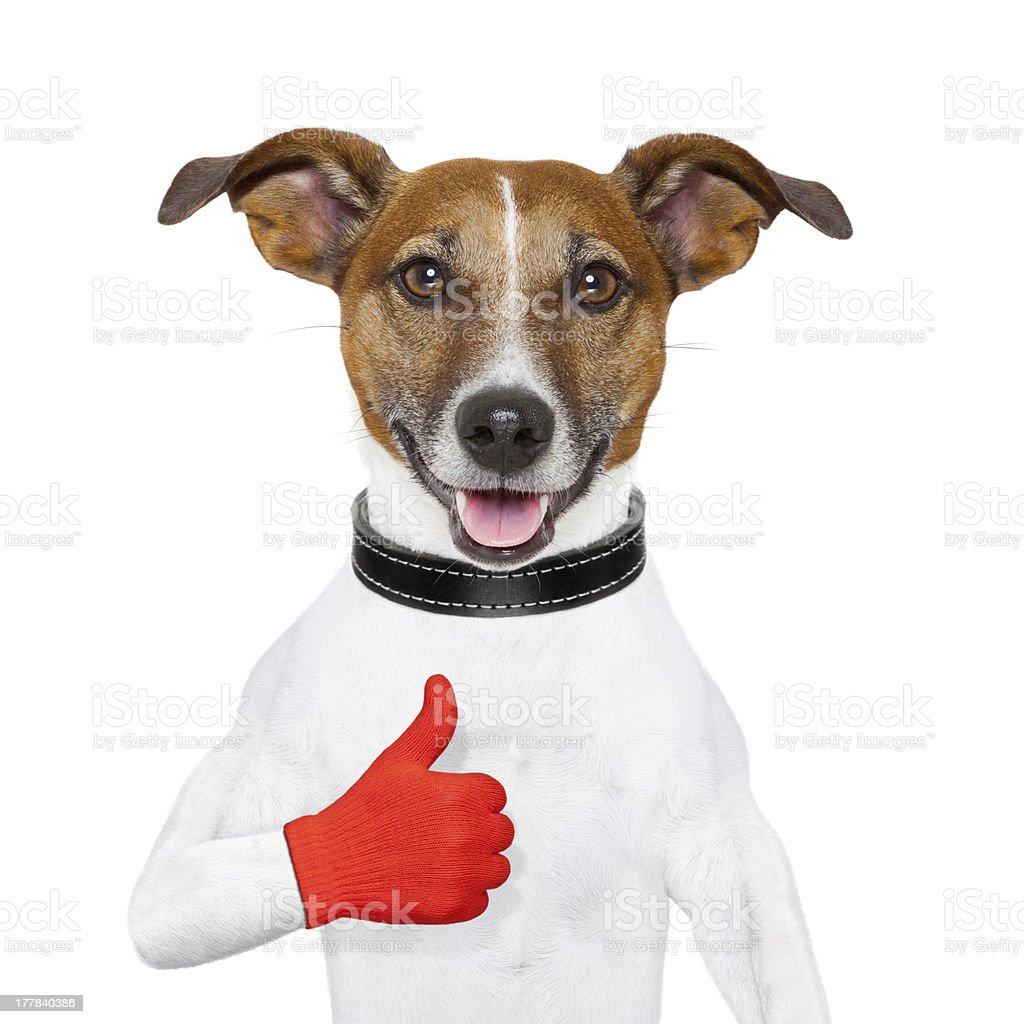 i like dog royalty-free stock photo