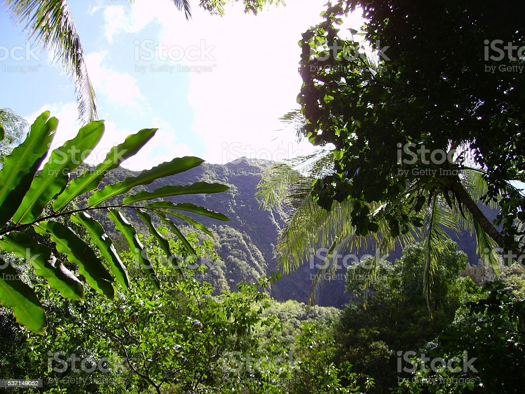 Iao Valley State Park stock photo