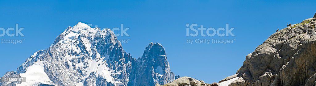 Ibex and ice mountain blue royalty-free stock photo