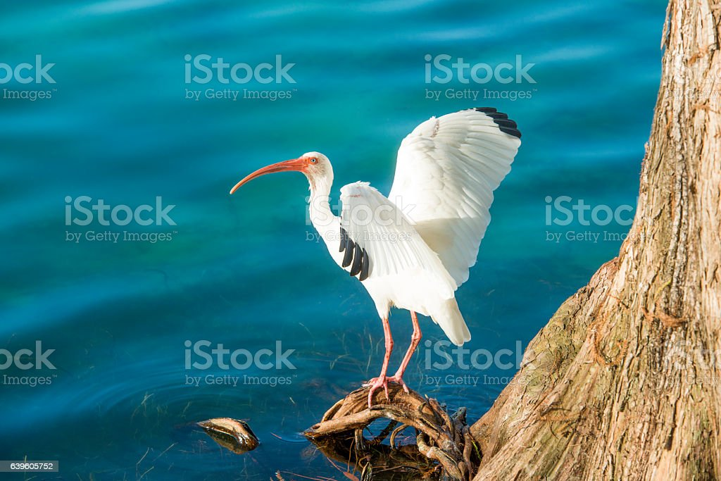 This is a royalty free color photograph shot in downtown Orlando,...