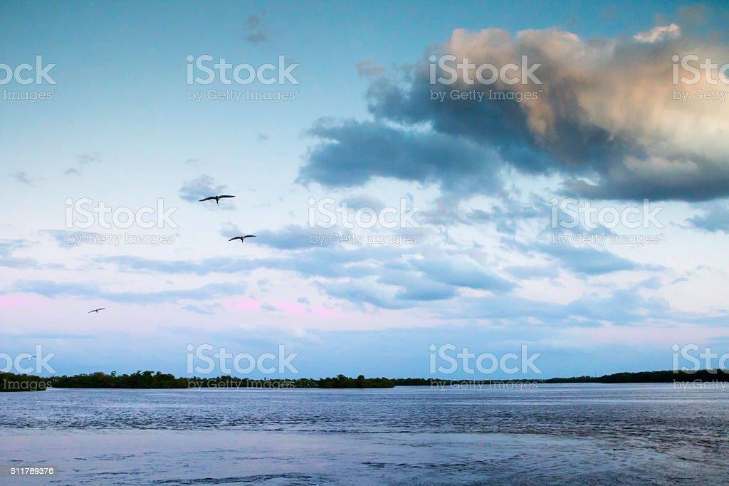 Ibis in Flight over Refuge stock photo