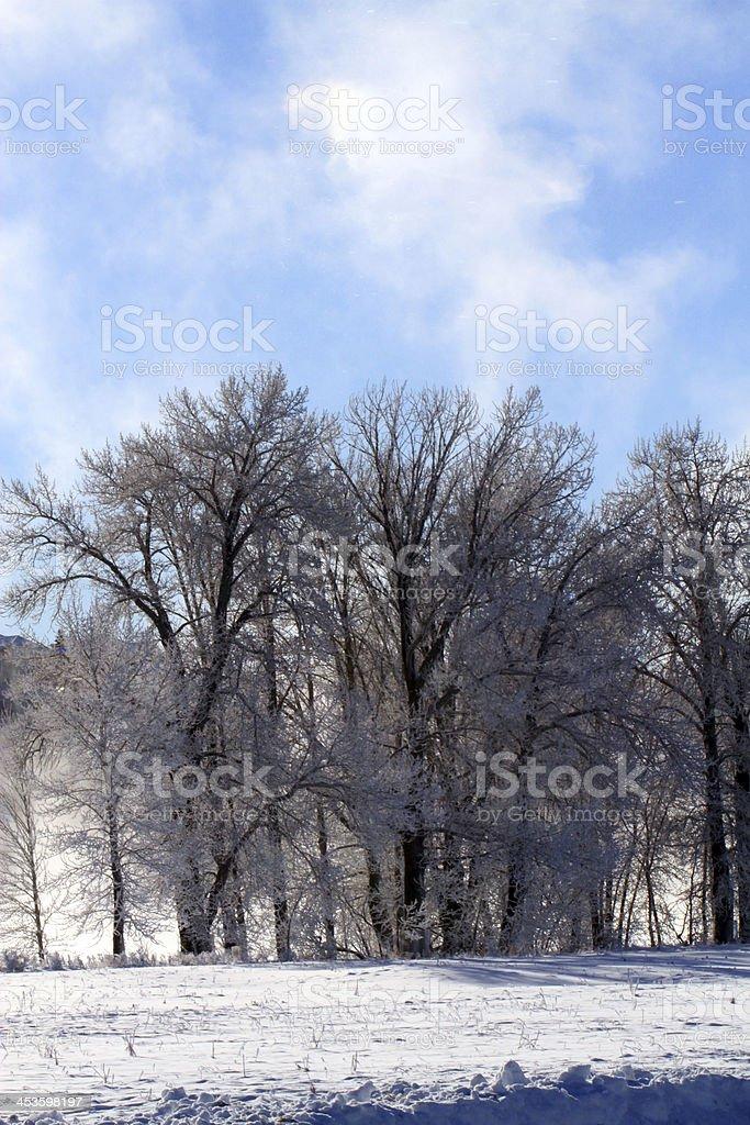 Ice Age royalty-free stock photo