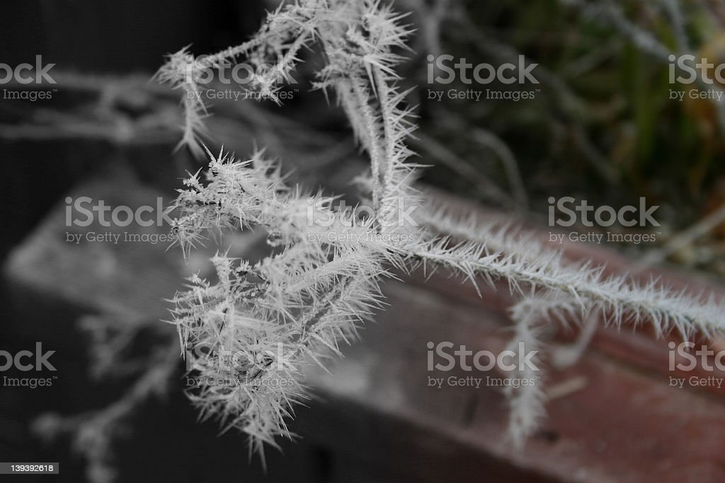Ice attached to small dead twig stock photo
