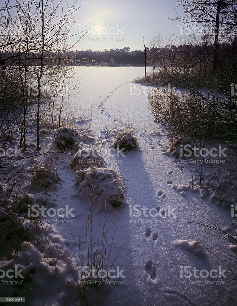 Ice covered lake with fresh animal trail at dawn. stock photo