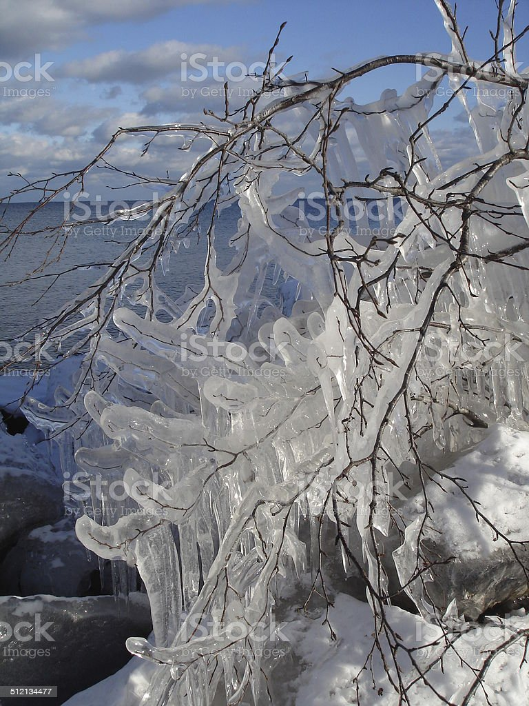Ice covered tree branch and rocks stock photo