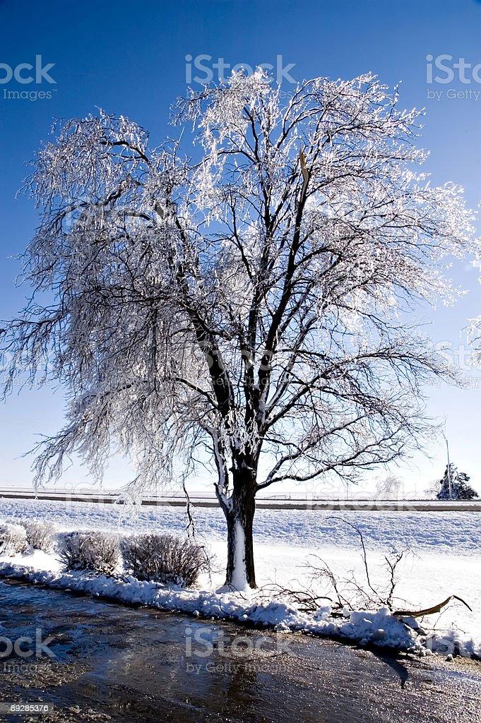 Ice Covered Tree near Road stock photo