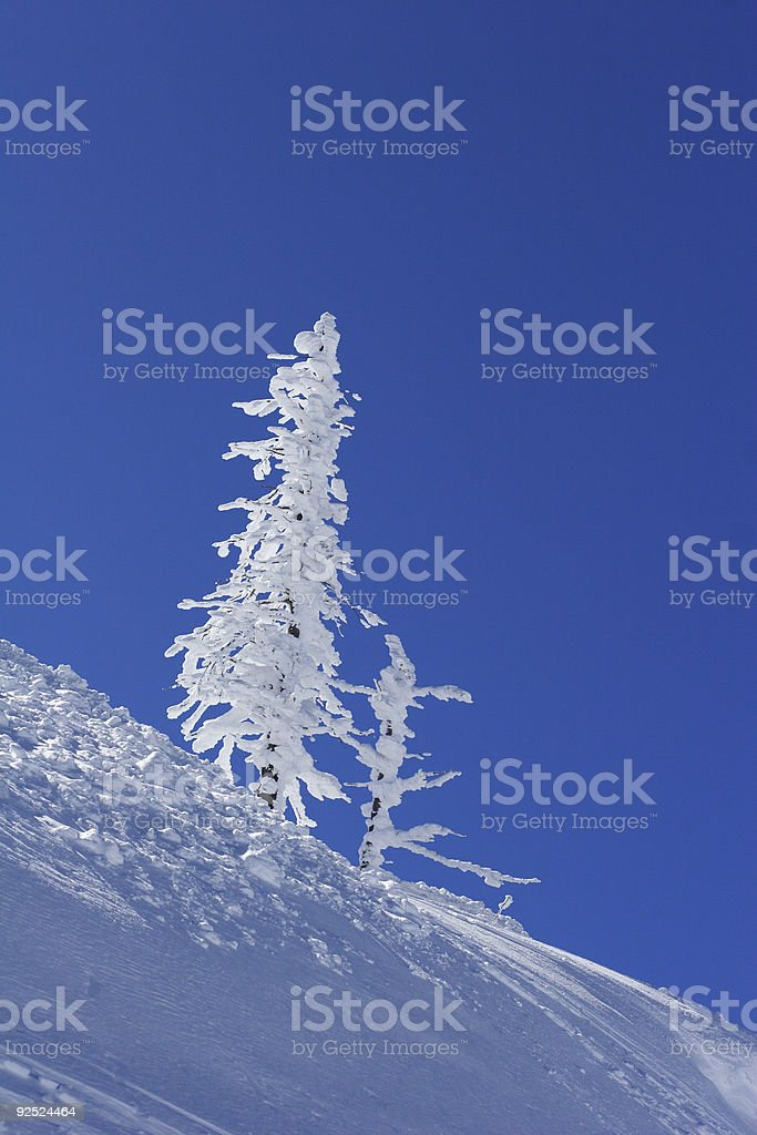Ice Covered  Tree royalty-free stock photo