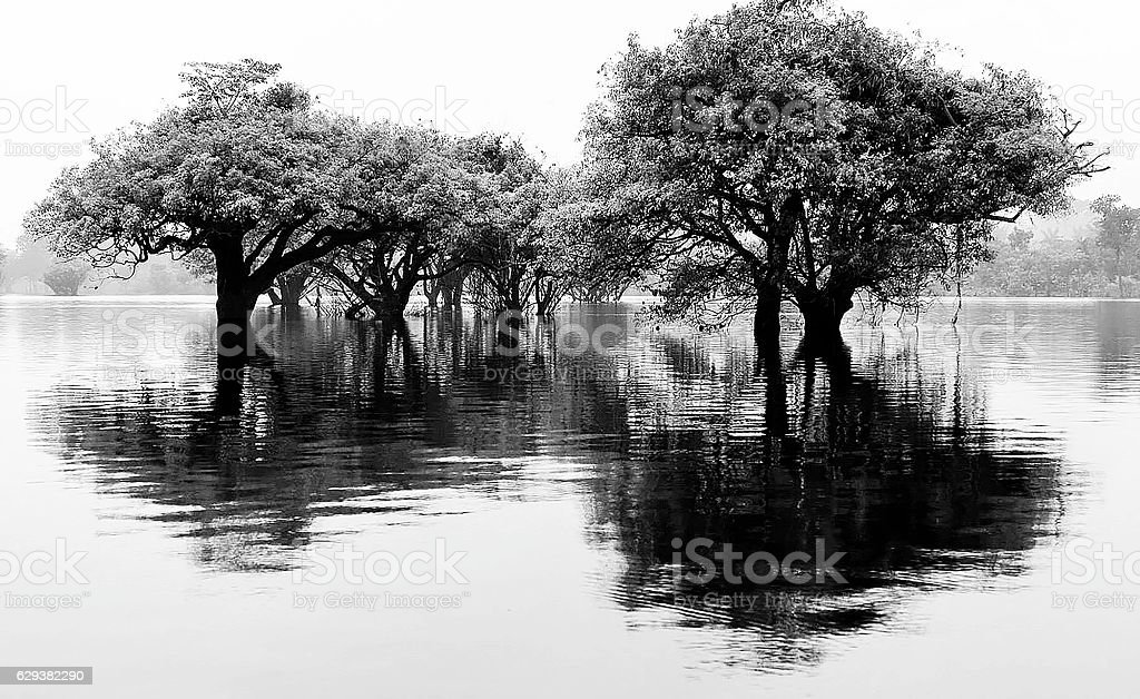 Ice Covered Trees stock photo