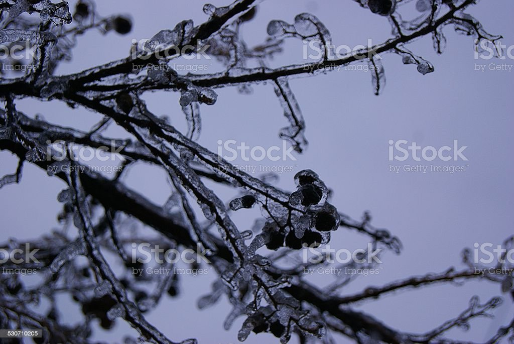 Ice Covering royalty-free stock photo