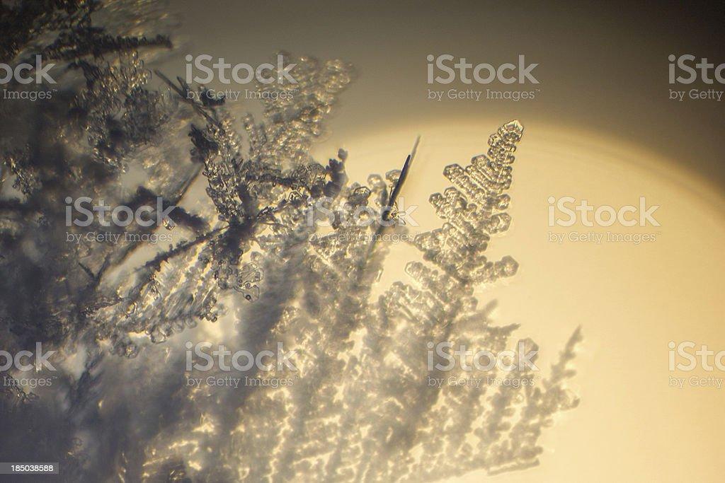 Ice crystal. royalty-free stock photo