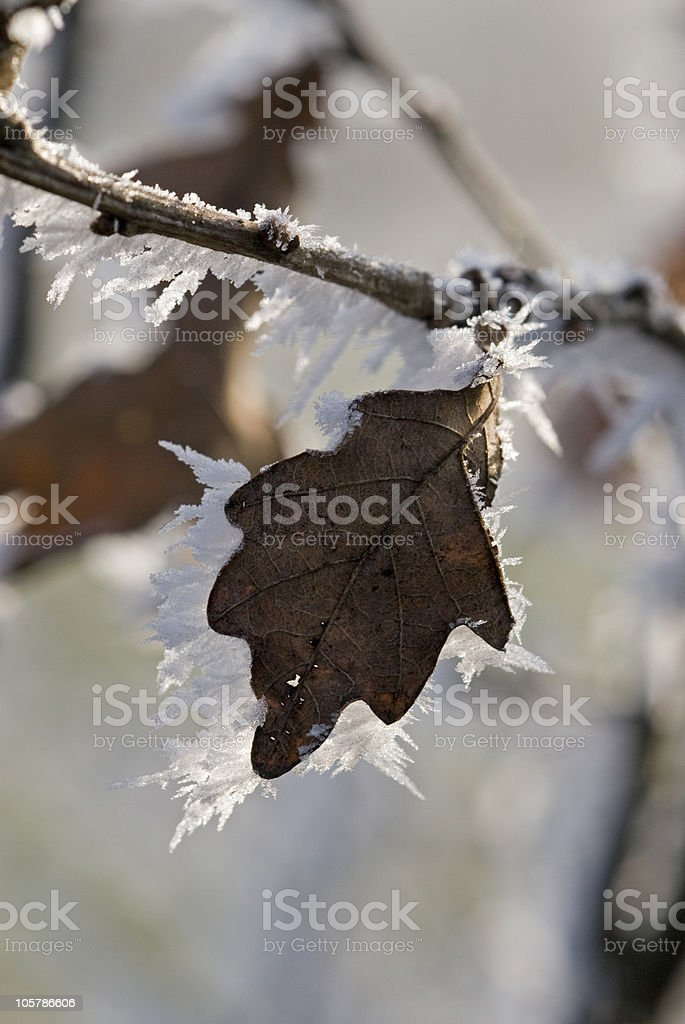 Ice Crystals at the Leaf stock photo
