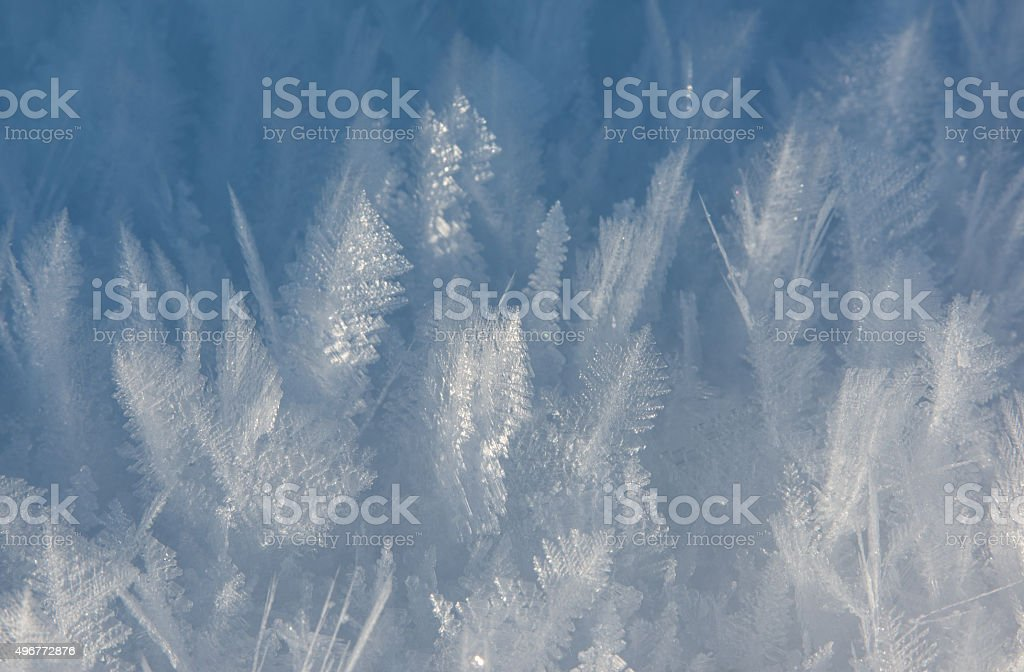 ice crystals looking like plants stock photo