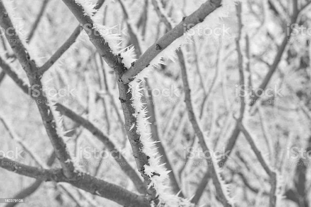 Ice Crystals on a Tree Branch stock photo