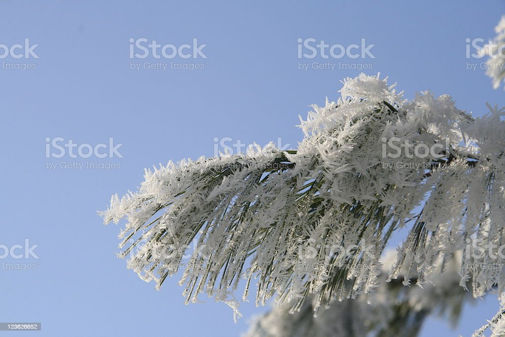 ice crystals on frozen tree blue sky winter royalty-free stock photo
