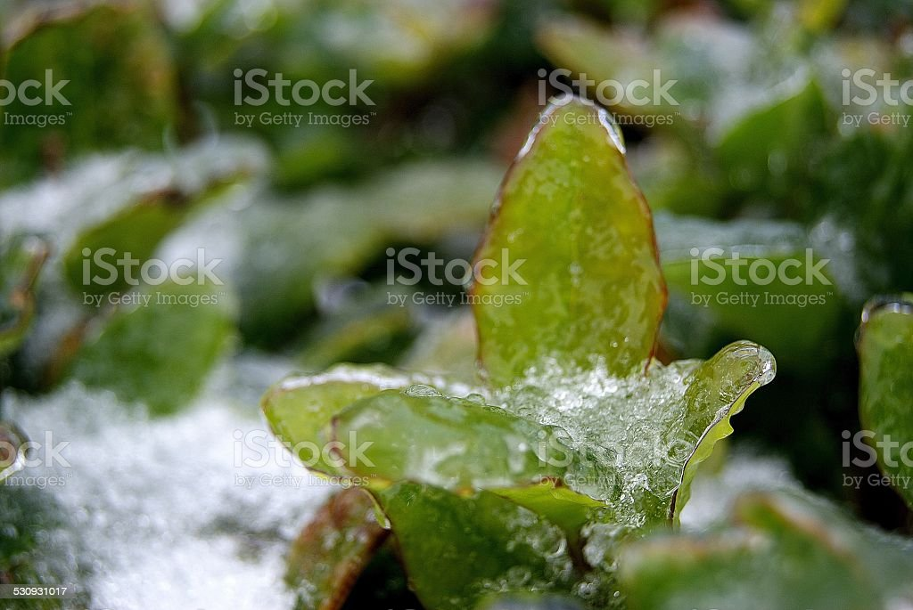 Ice Cup royalty-free stock photo