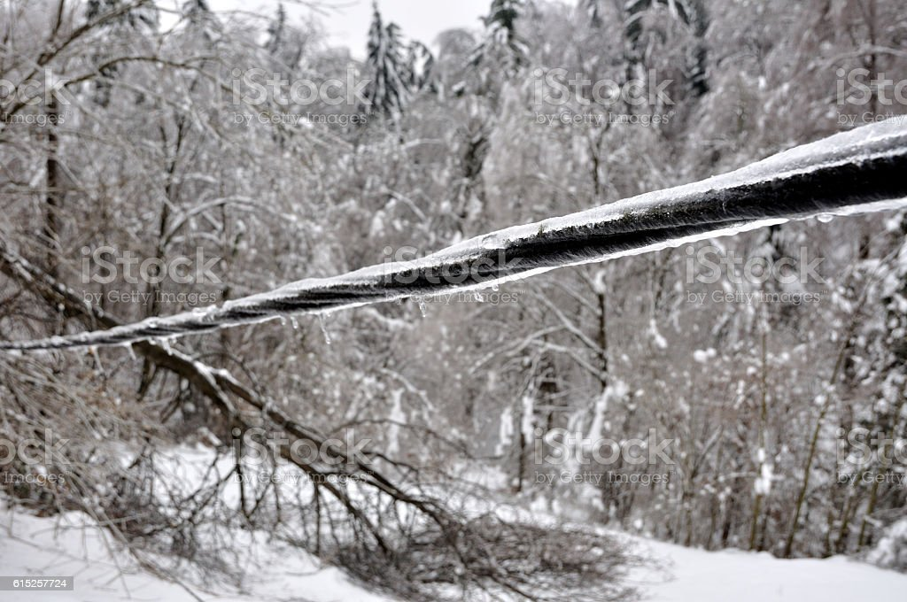 ice damaged power line and trees stock photo