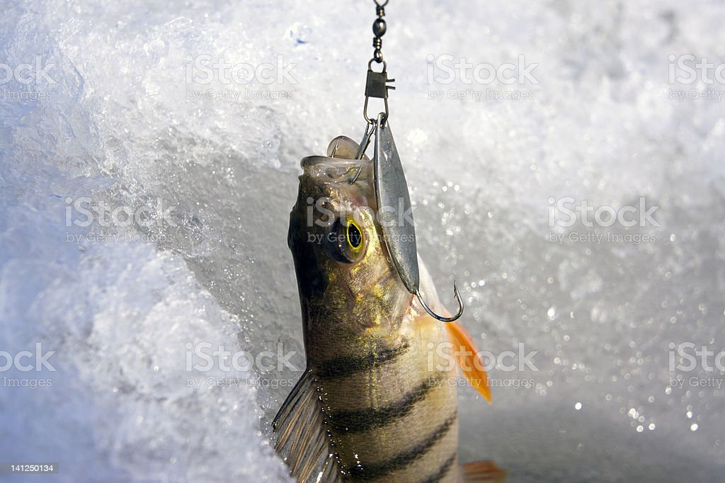 ice fishig stock photo