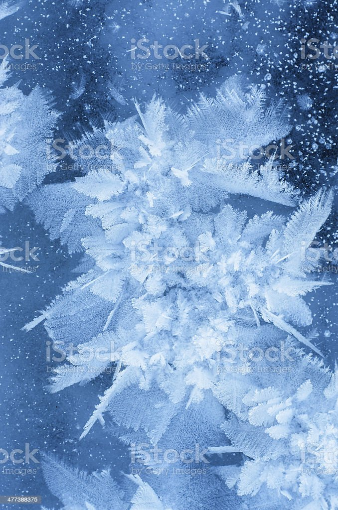 Ice flower. stock photo