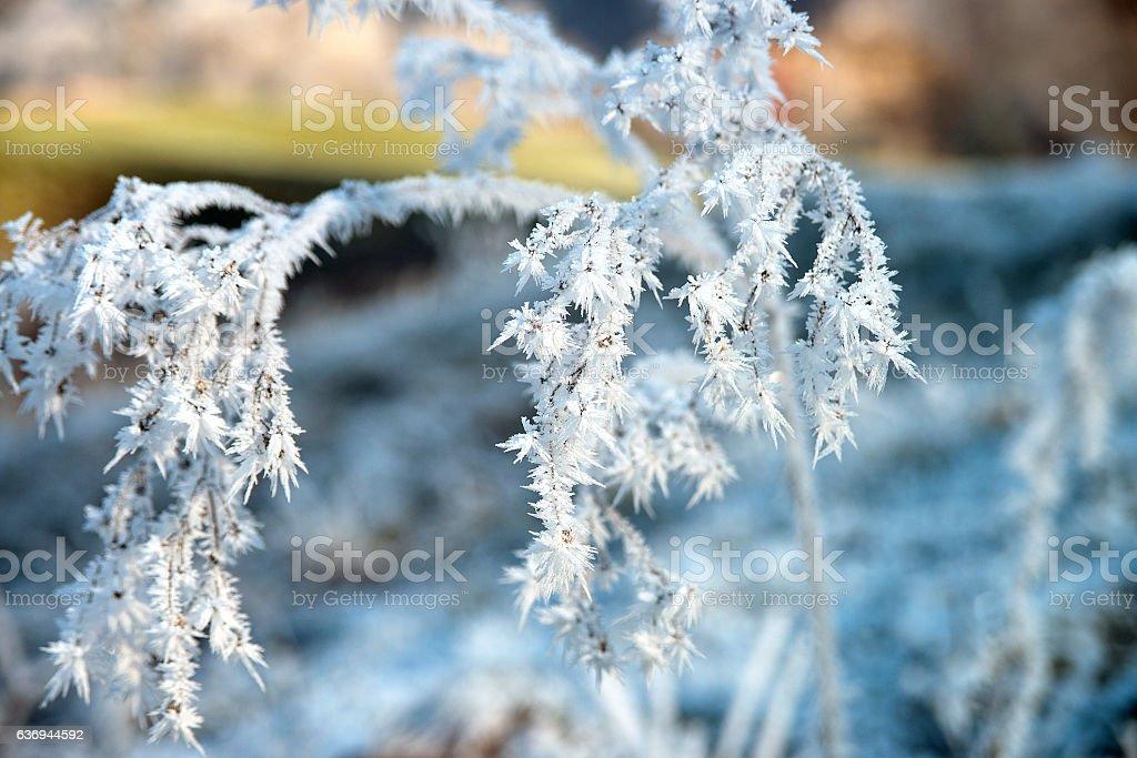 Eisblumen an einem Strauch stock photo
