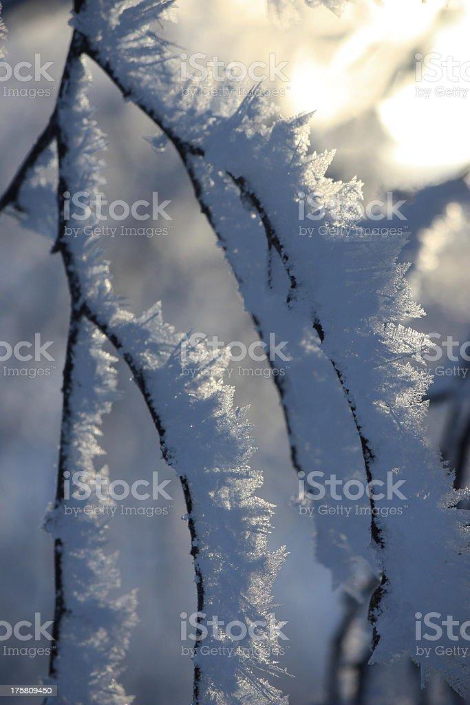 Formaciones de hielo en una rama foto de stock libre de derechos