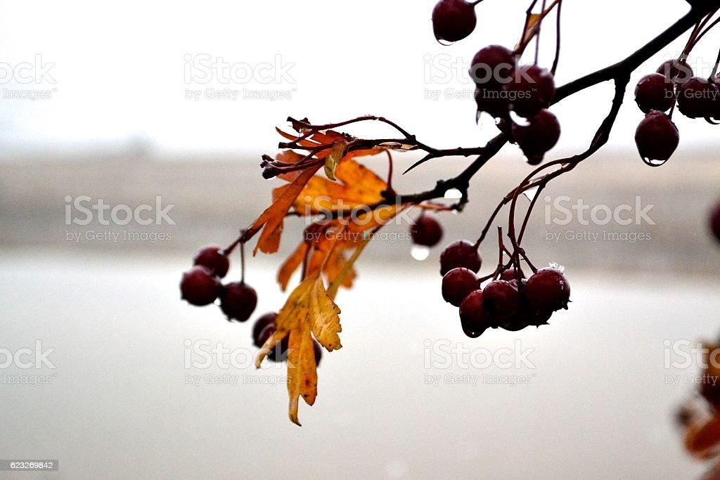 Ice fruits stock photo