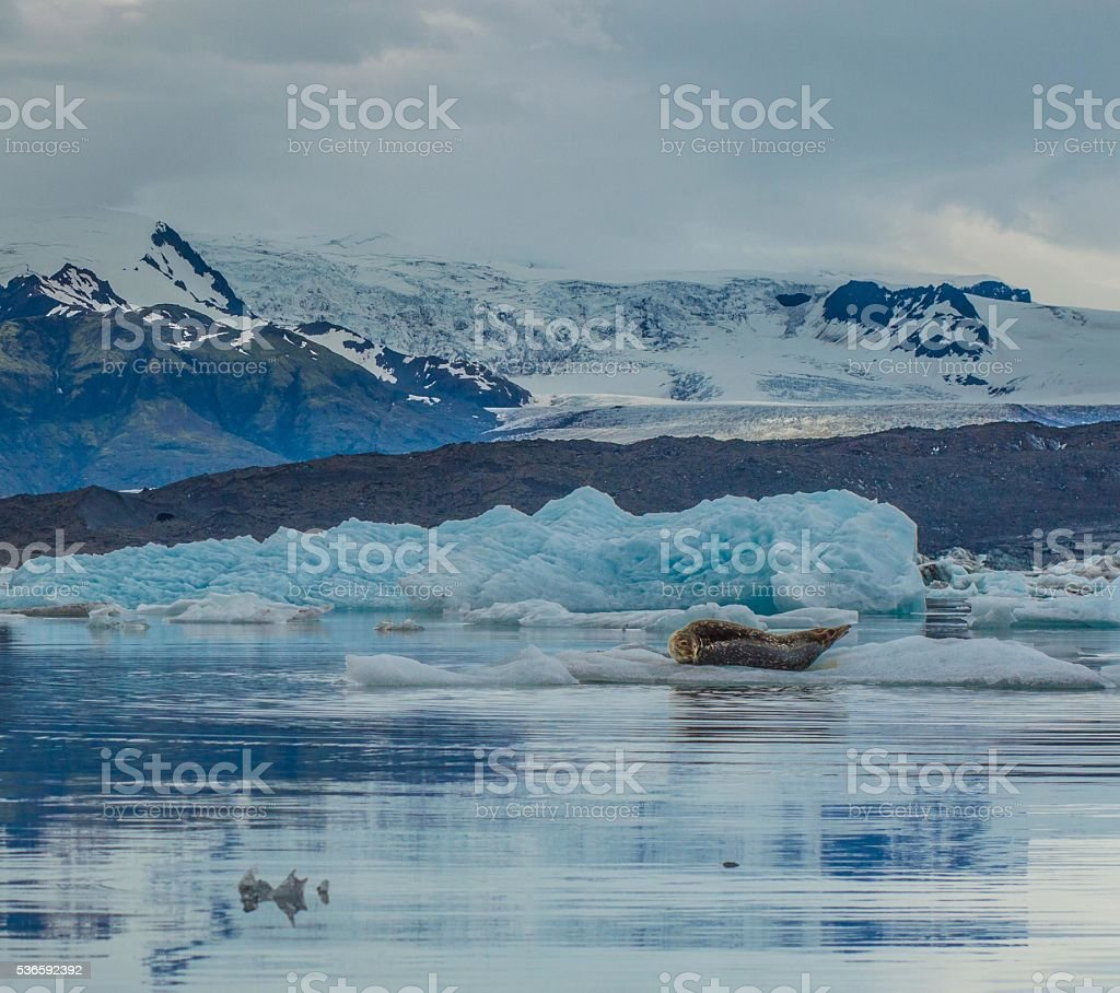 Ice mountain stone seal winter water seal climate environment stock photo