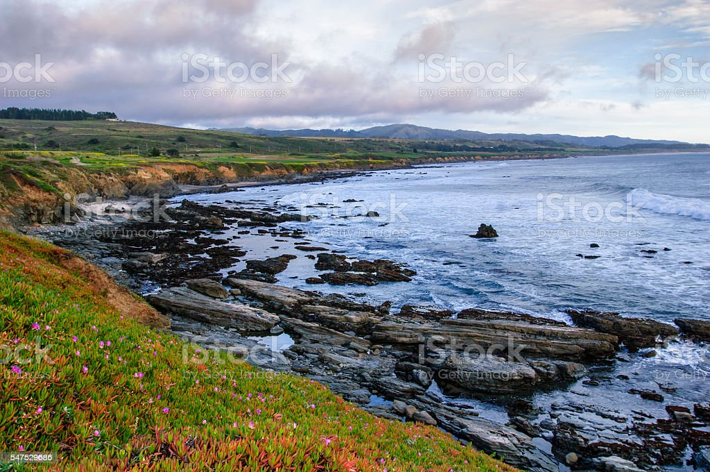 Ice Plants Along the California Coast stock photo