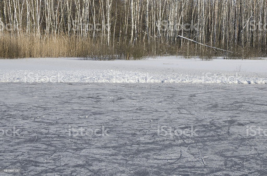 ice ring in forest stock photo