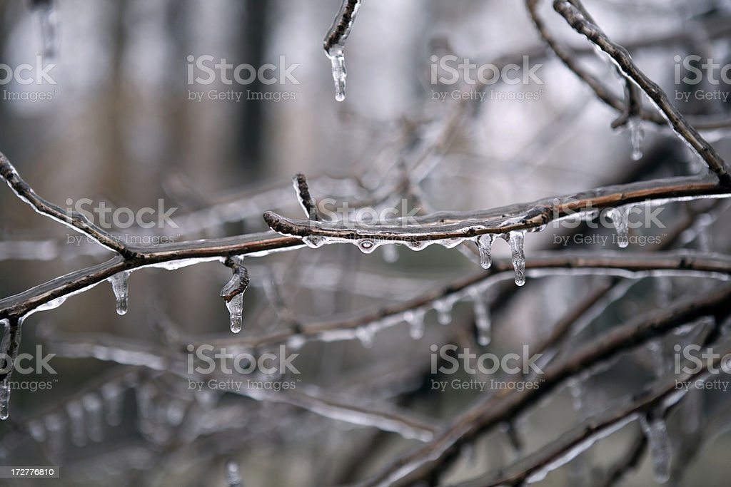 Ice Storm Frozen Trees royalty-free stock photo