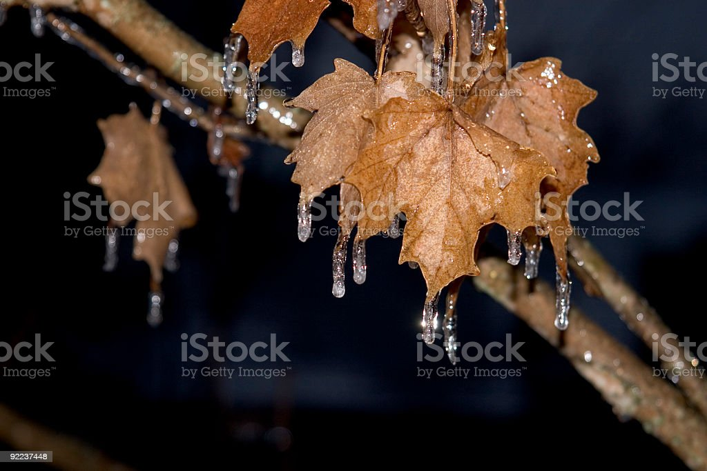 Ice Storm royalty-free stock photo