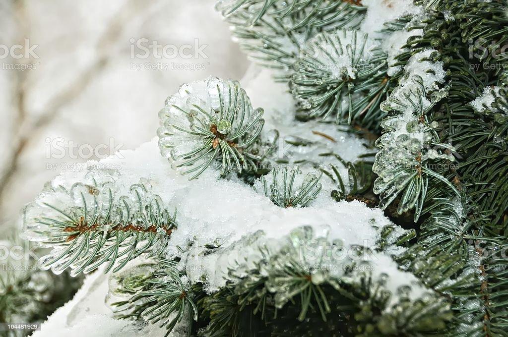 Ice tree royalty-free stock photo