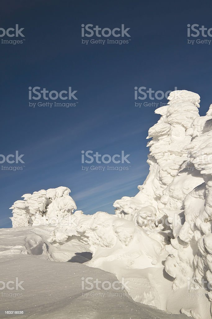 ice tree sculpture in winter, summit of Vosges, France stock photo