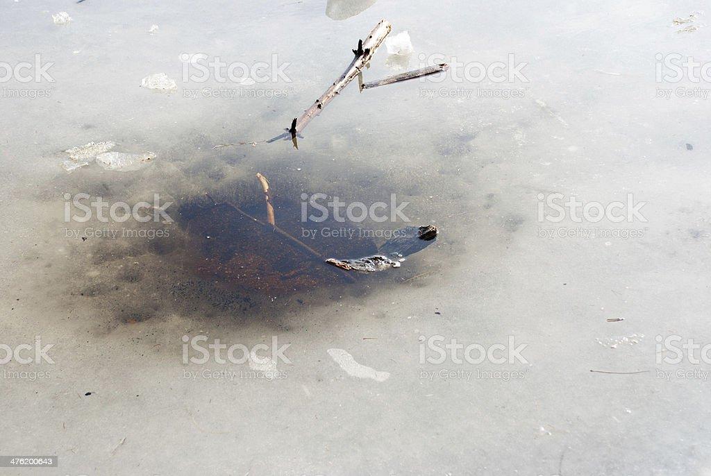 ice whole stock photo