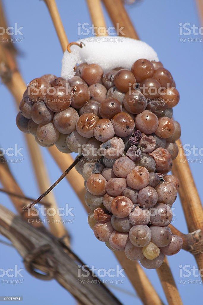 Ice wine grape stock photo