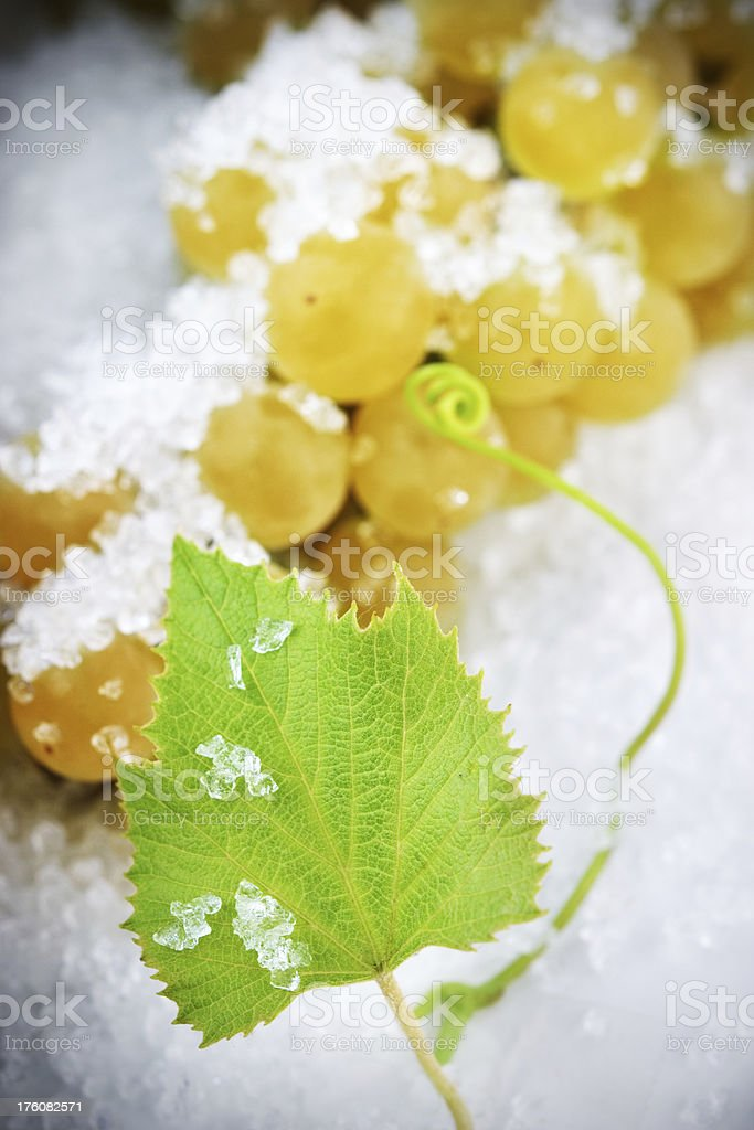 Ice Wine in the Making stock photo