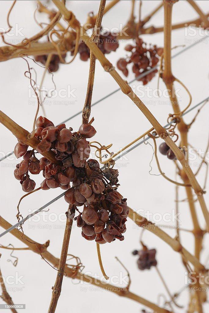 ice wine stock photo
