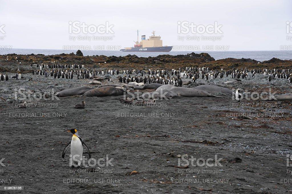 Icebreaker at Macquarie Island stock photo