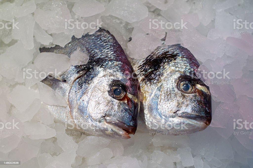 Iced fresh fish royalty-free stock photo