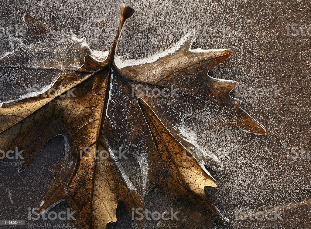 iced leaf royalty-free stock photo