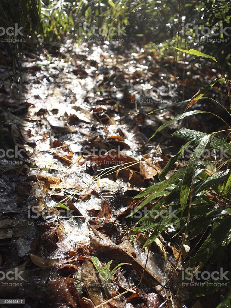 Iced leaves dropped on the soil stock photo