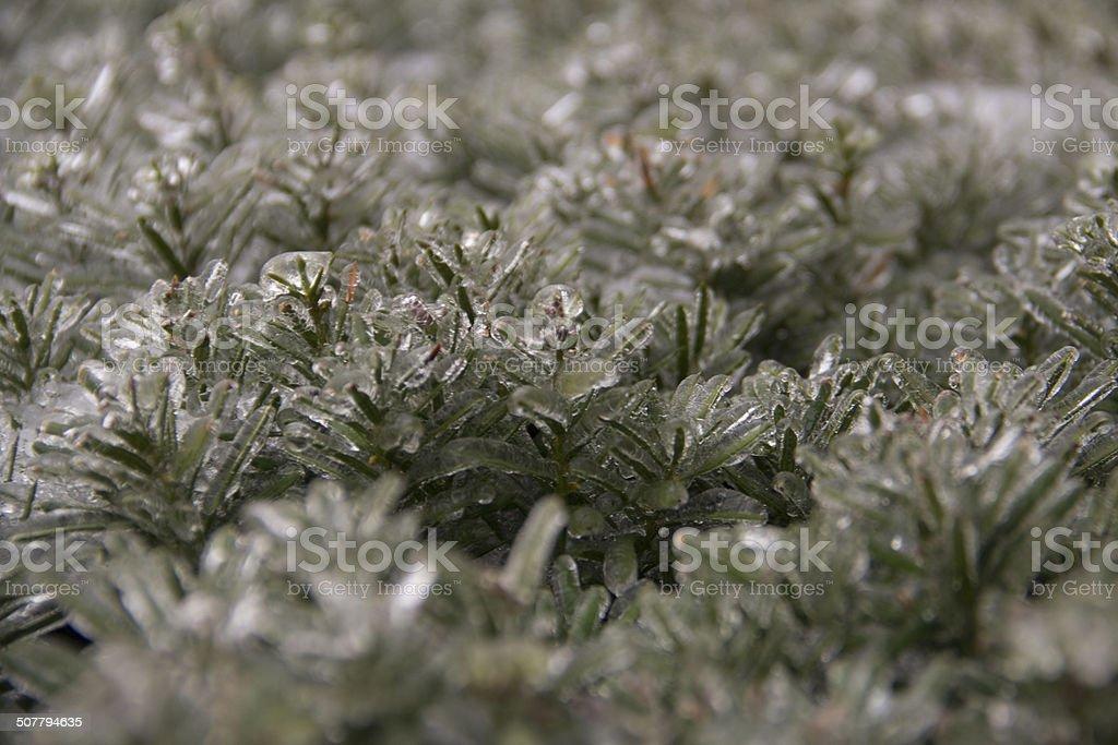 Iced over bush stock photo