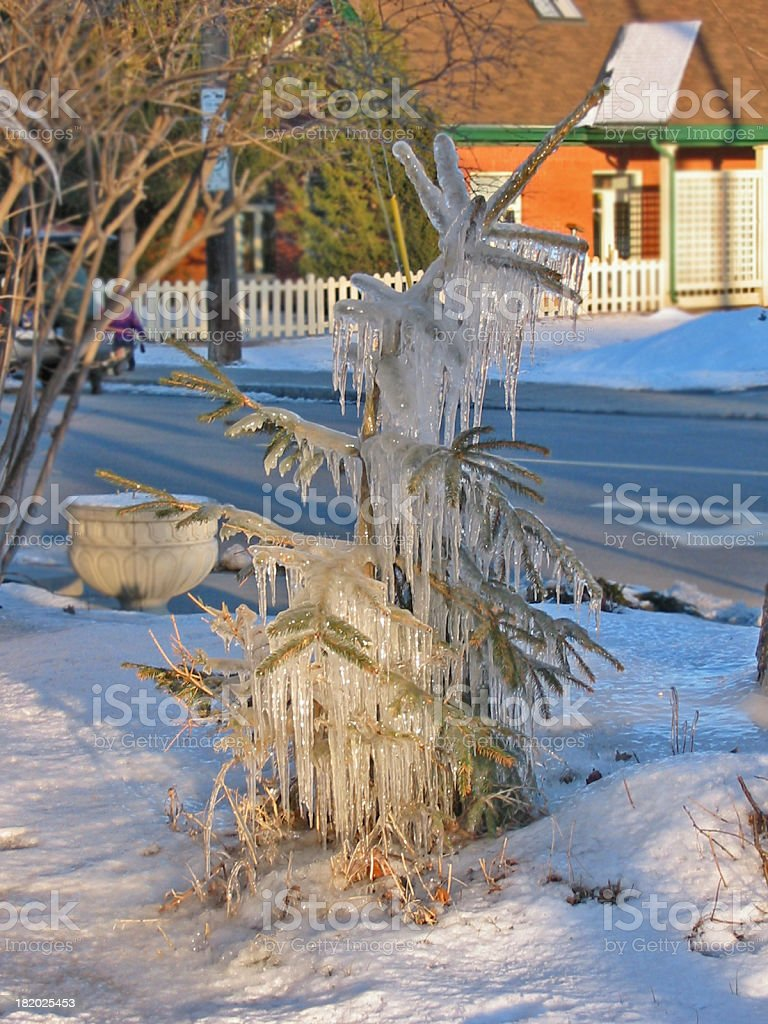 Iced Tree royalty-free stock photo