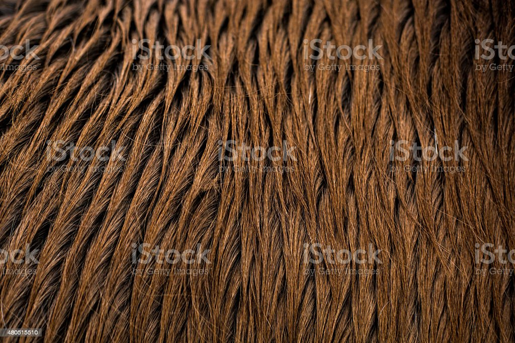 Icelandic horse hair stock photo
