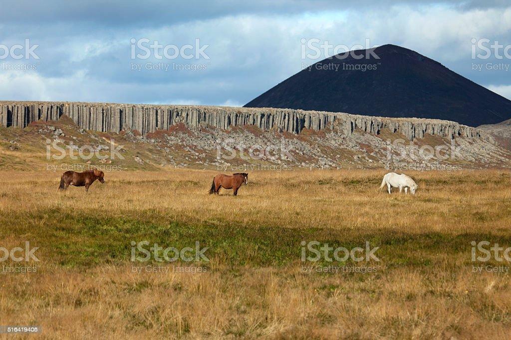 Icelandic horses basalt lava columns Snaefellsnes Peninsula volcano Iceland stock photo