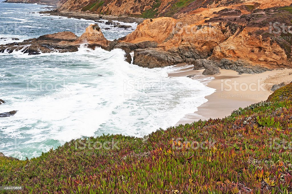 Iceplants over looking waves on the beach Bodega Bay Head stock photo