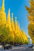 Icho Namiki Street in autumn