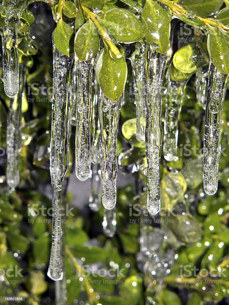 icicle in New York City on plants royalty-free stock photo