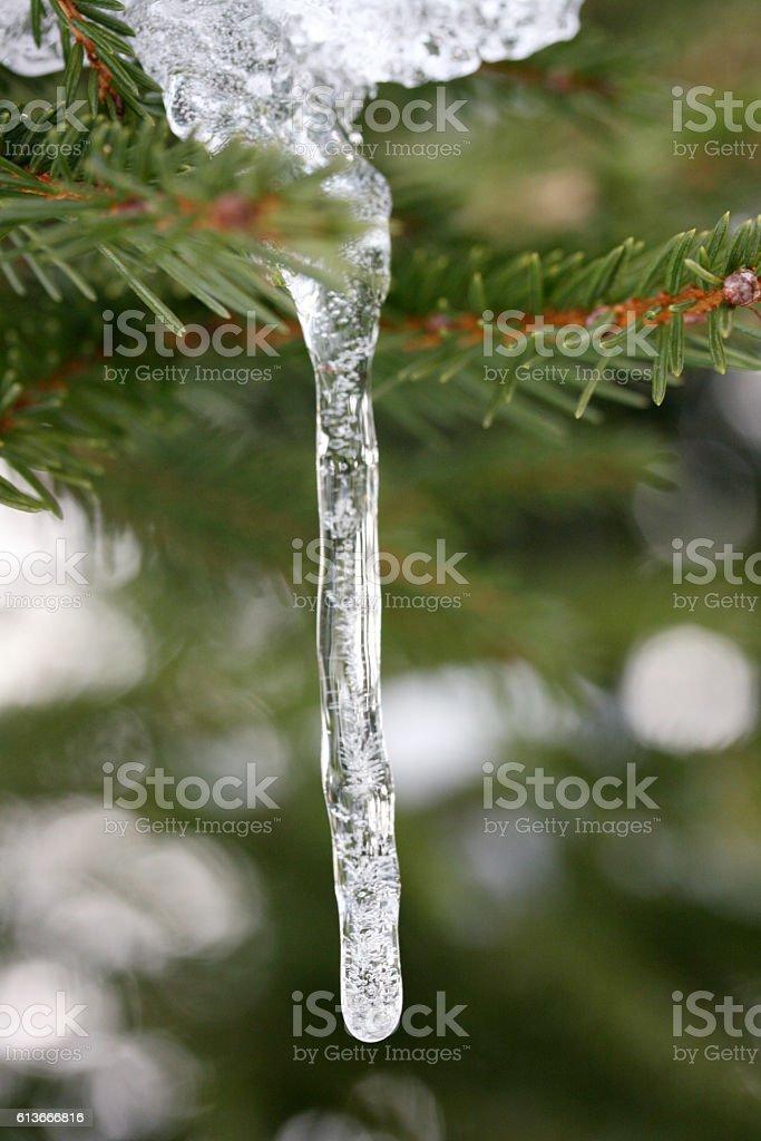 icicle stock photo