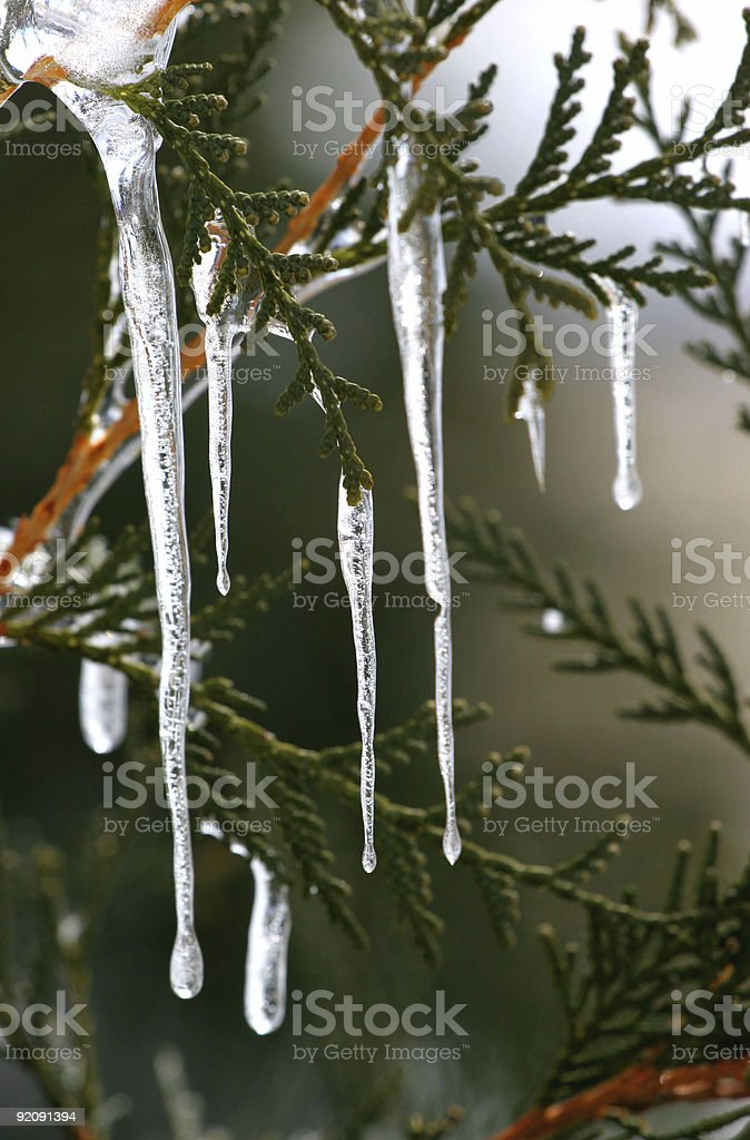 icicles falling from a fern tree royalty-free stock photo